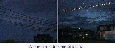 Birds... Birds!!!