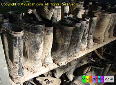 Boot for Night Safari
