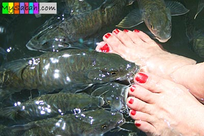 Fishes sucking foot