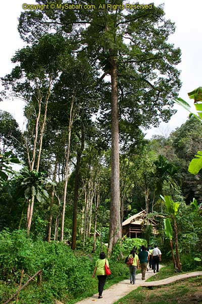 Mari-Mari Cultural Village in the jungle