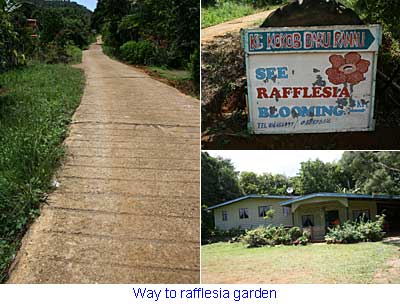 Way to Rafflesia garden