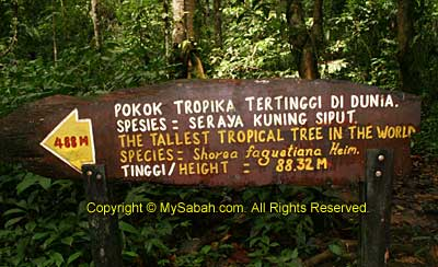 Signage to tallest tree