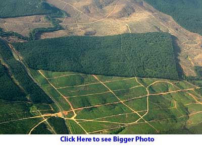 Hill clear for oil palm