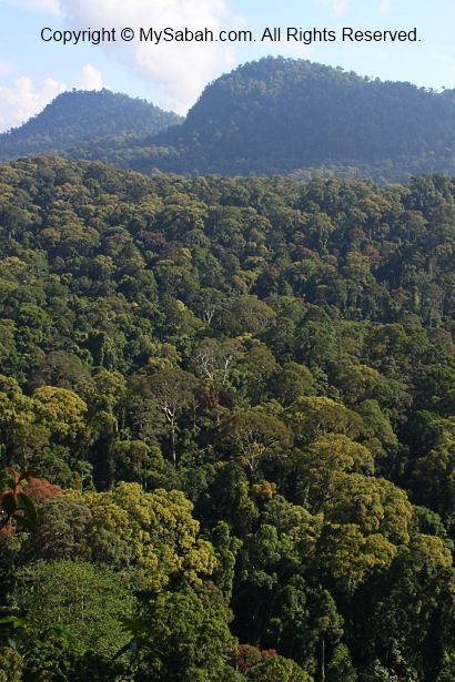 bird eye view of Danum Valley