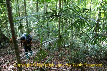 montane subtropical forest in india