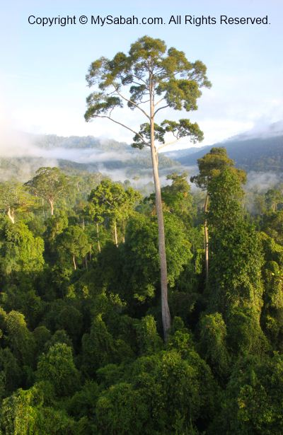 sunrise in Maliau Basin