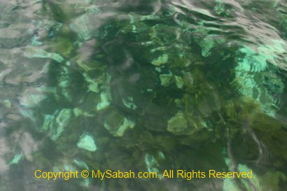 Coral bleaching in Usukan Cove Lodge