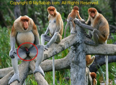 Consider, Picture of monkey having sex that