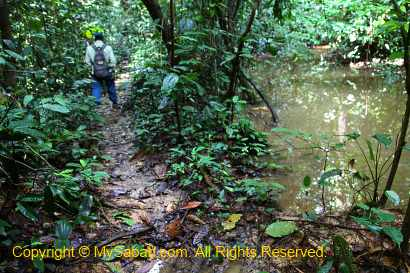 Jungle trekking in Sepilok virgin forest