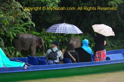 tourists watching pygmy elephants