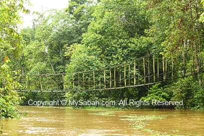 Bridge for orangutan crossing