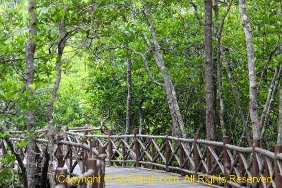 Boardwalk in mangrove
