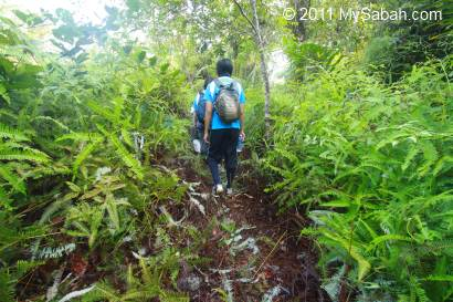 fern path of Pinangah forest reserve
