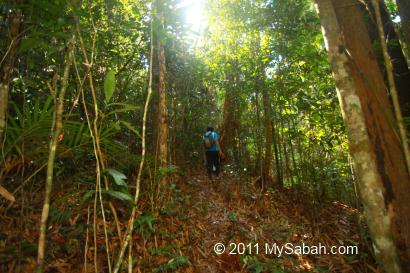 Secondary forest of Pinangah forest reserve