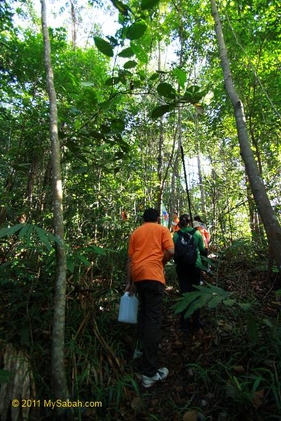 forest of Bukit Gundul