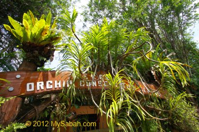 Orchid Conservation Centre