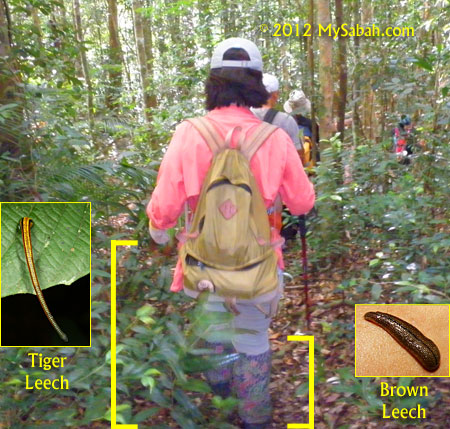 activity zone of different leeches