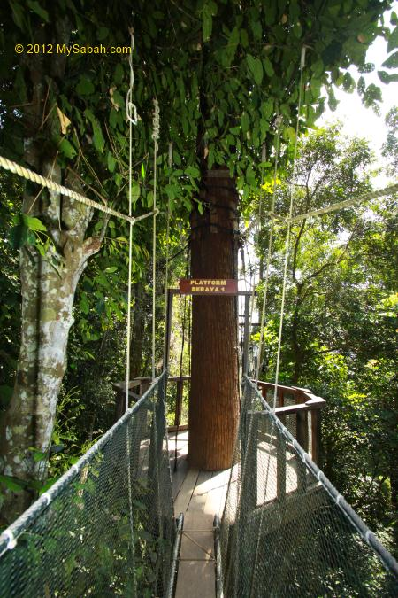 tree-top tower of Canopy Walkway & Poring Canopy Walkway the highest in Sabah - MySabah.com