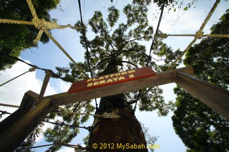 2nd platform of Poring Canopy Walkway