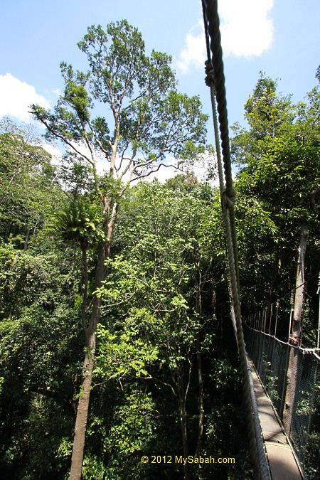 view of canopy from top