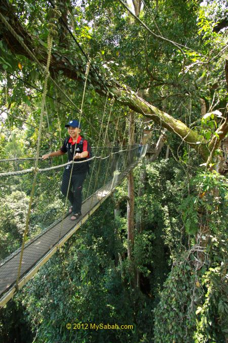 kid have fun on Canopy Walkway