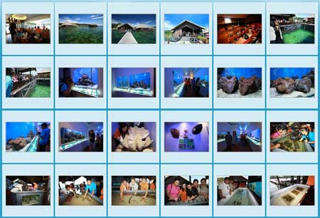 Photo gallery of Gayana Eco Resort