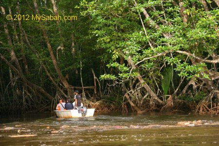 mangrove forest of Bongawan