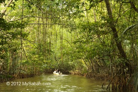 river cruise inside mangrove