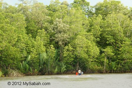 seaward mangrove zone