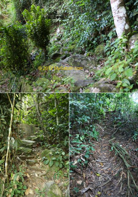 jungle trail to Kiansom Waterall