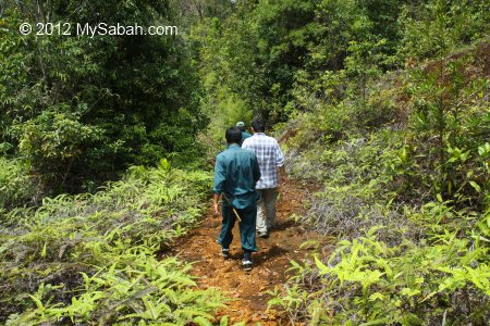 walking to Tawai Waterfall