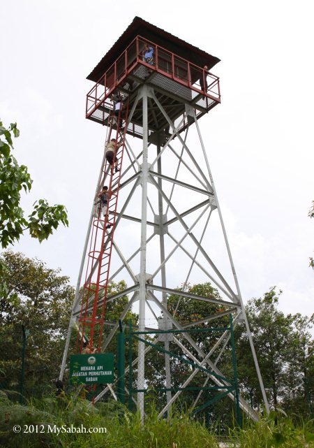 forest fire observation tower on Microwave Hill