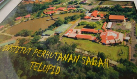 layout of IPS (Institut Perhutanan Sabah)