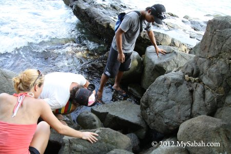 looking for sea snake under the rock