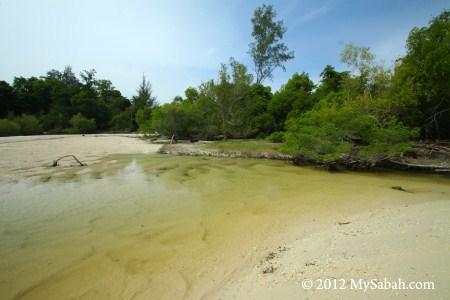 coastal swamp in Pulau Tiga
