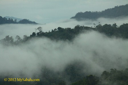 misty Borneo forest