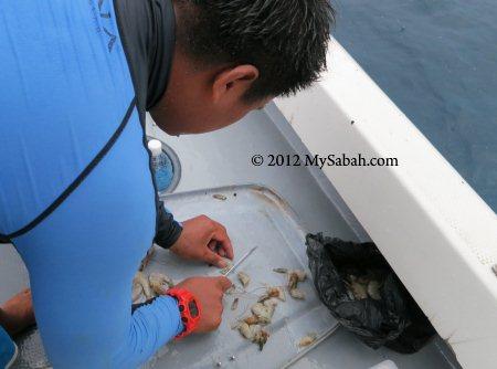 preparing fish bait
