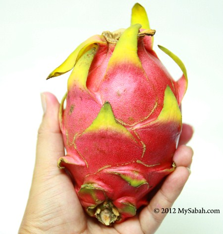 dragon fruit (white flesh)