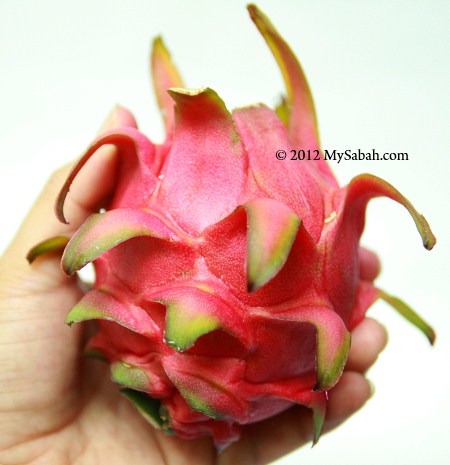 dragon fruit (red flesh)