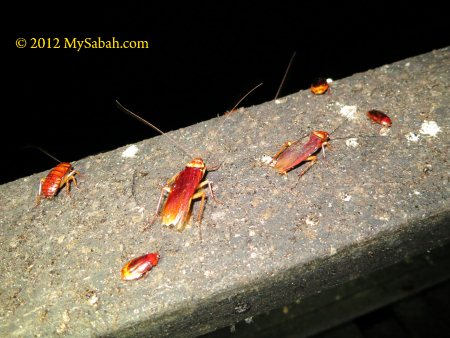 cockroaches on hand rail