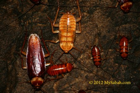 cockroaches in cave