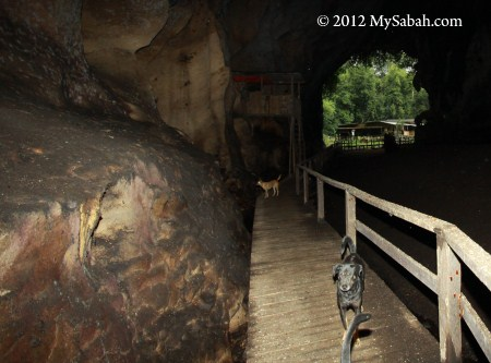 boardwalk inside Gomantong Cave