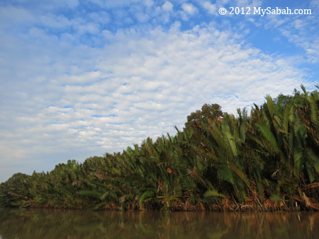nypa swamp