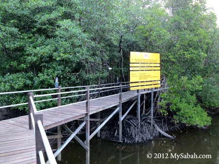 boardwalk to the Sepilok mangrove