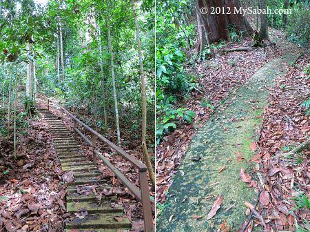 trail to Bukit Tongkat Ali