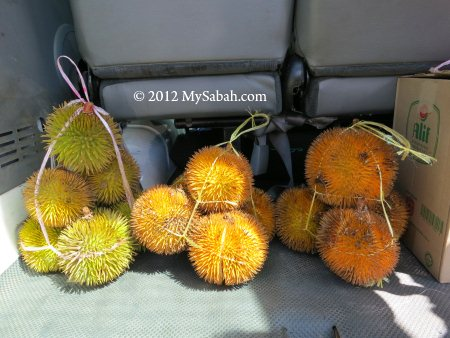 durians in car