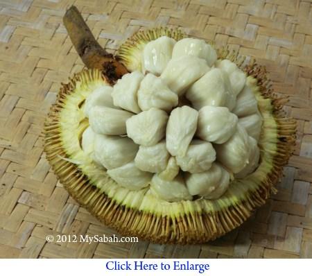 tarap of Borneo