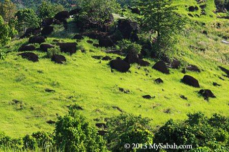 volcanic rocks on Bukit Tengkorak