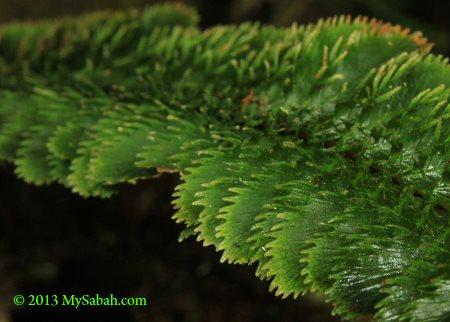 weird leaf