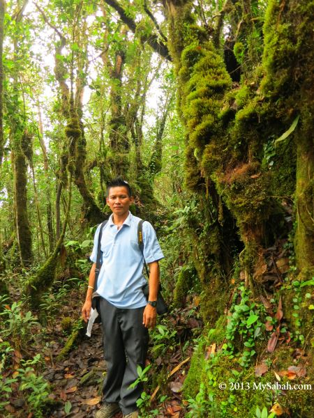 montane forest of Mt. Silam